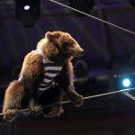 Медведи-канатоходцы