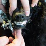 Экзоскелет нижней челюсти - изобретения коллектива разработчиков ВолгГМУ - на собаке