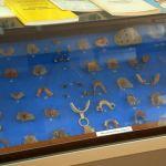 «Это всё вошло в историю»: в музее ВолгГМУ 60-летию стоматологического факультета посвятили выставку