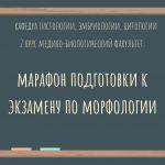 Марафон подготовки к экзамену по морфологии